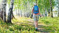 France : nos randonnées en forêt