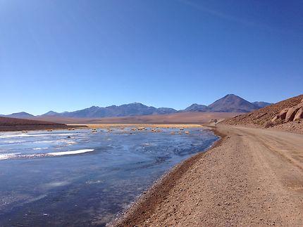 De retour des geysers du Tatio, au Chili