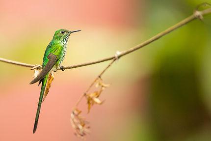 Observatoire des colibris à Bogotá