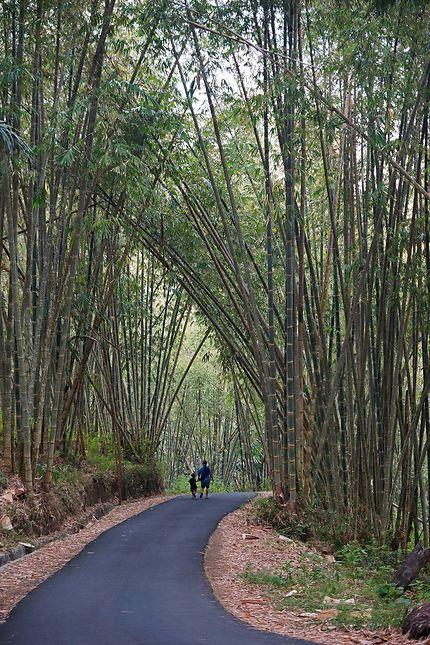 Promenade sous les bambous