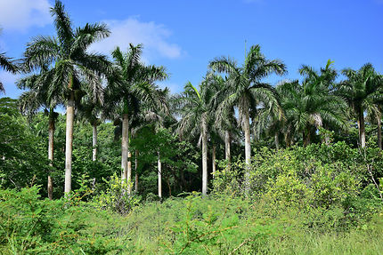Végétation luxuriante à Las Terrazas