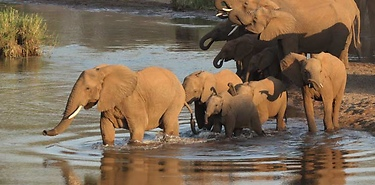 Immersion 100% safari - Afrique du Sud