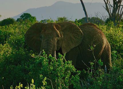 Surpris dans la brousse africaine