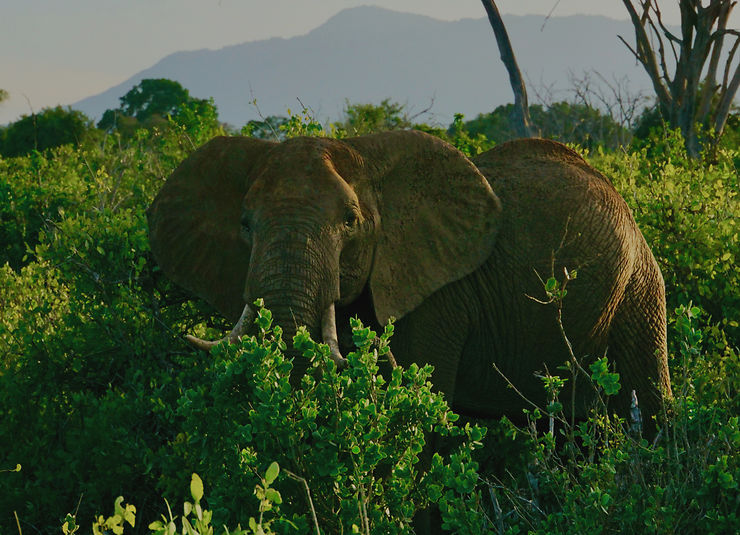 Éléphant au parc de Tsavo, Kenya