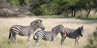Road trip chez les Zoulous - Afrique du Sud