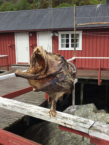 Stockfish au petit port de Nusfjord