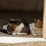 Dur d'être chat dans un monastère...