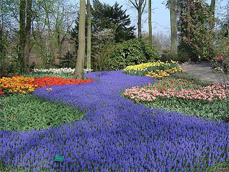 jardins du keukenhof fleurs keukenhof de lisse hollande m ridionale pays bas. Black Bedroom Furniture Sets. Home Design Ideas