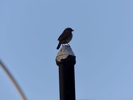 Un oiseau perdu sur Santa Monica Beach
