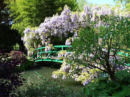 Jardin de giverny glycines fleurs maison de claude for Jardin giverny