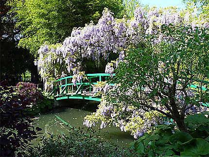 Jardin de Giverny - Glycines
