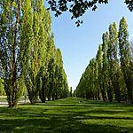 Verdure au parc de Sceaux