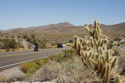 Cactus et désert dans la région de San Diego