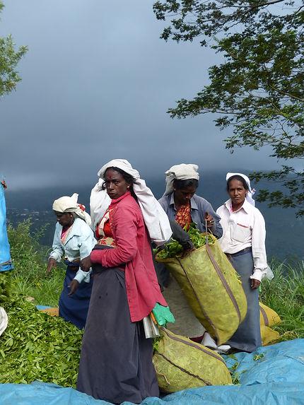 Fin de journée à Haputale, Sri Lanka