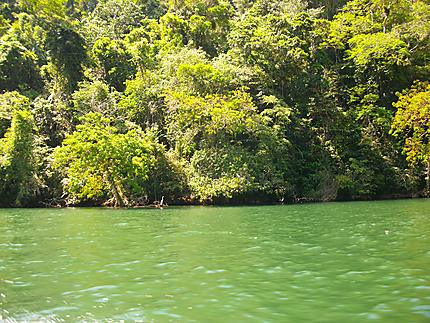 De Livingston à Rio Dulce