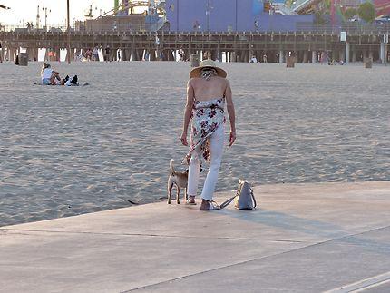Le royaume des petits chiens à Monica beach
