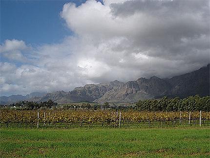 Sur la route des vignobles