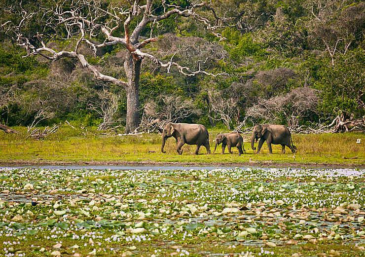 Parc national de Yala (Sri Lanka)