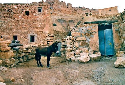Un âne au repos