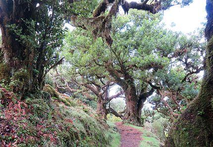 Ambiance magique dans la forêt de Fanal