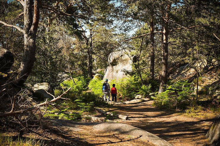 Île-de-France : randonnées en forêt