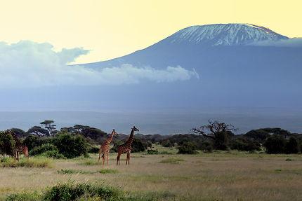 Belle vue sur le Kilimandjaro