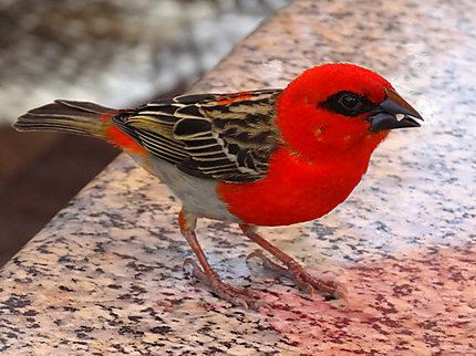 Oiseau à Port-Louis