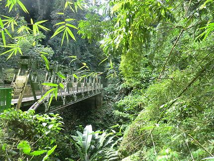 En direction de Grand-Rivière, Martinique