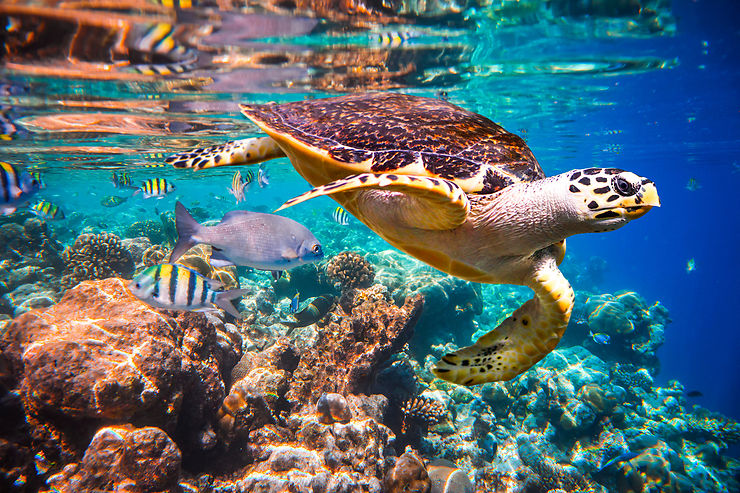 Perhentian Besar, nager avec les tortues