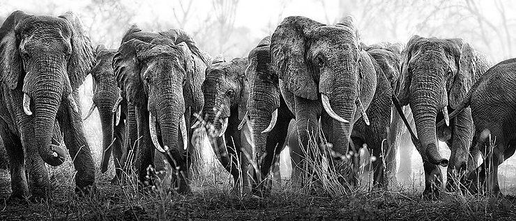 Éléphants au point d'eau, Tanzanie