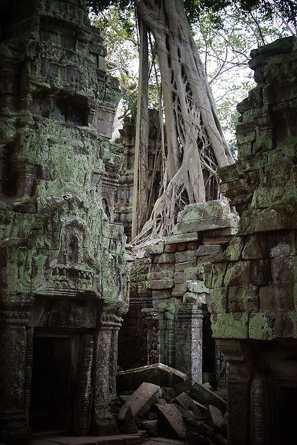 Contraste à Ta Prohm, Cambodge