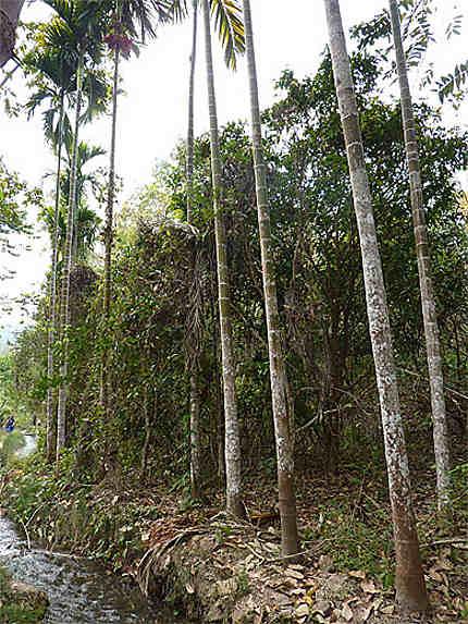 Jungle thai