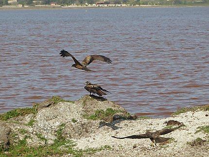 Vol sur le lac rose