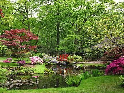 Jardin japonais du parc Clingendael