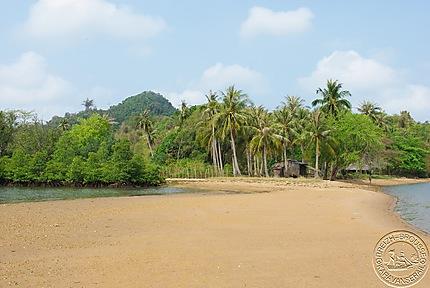 Rabitt island