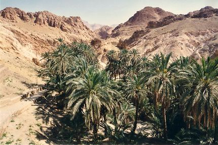 Oasis dans le sud de la Tunisie