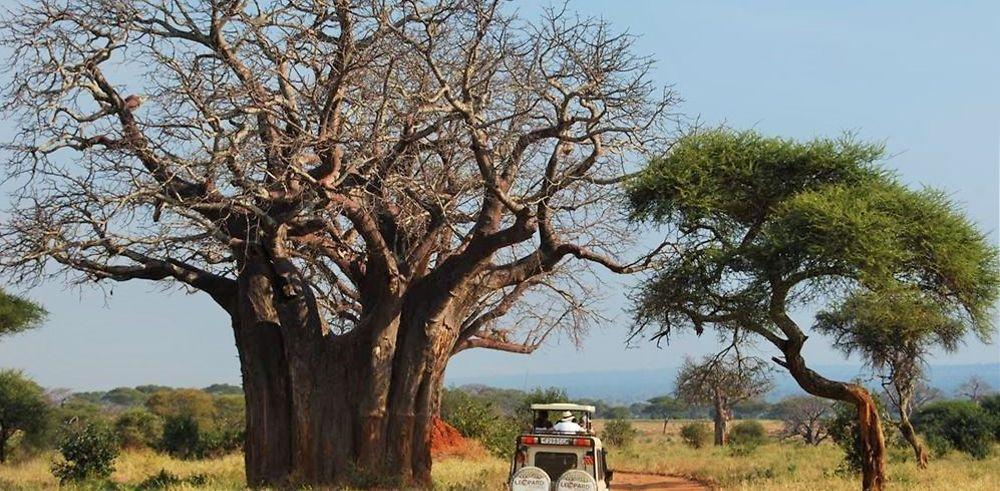 Tanzanie : au milieu des animaux sauvages