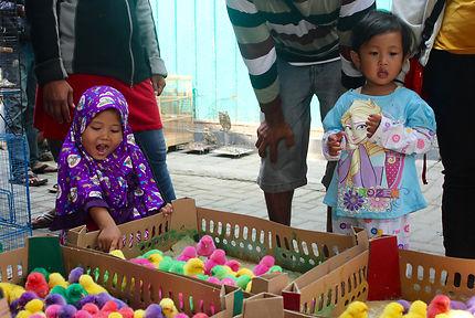 Le marché aux oiseaux de Yogyakarta