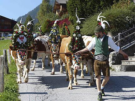 Descente des alpages - Alpbach