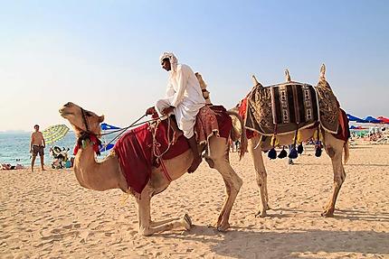 JBR Walk - Les chameaux et le guide