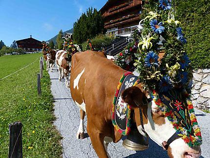 Transhumance - descente - Alpbach