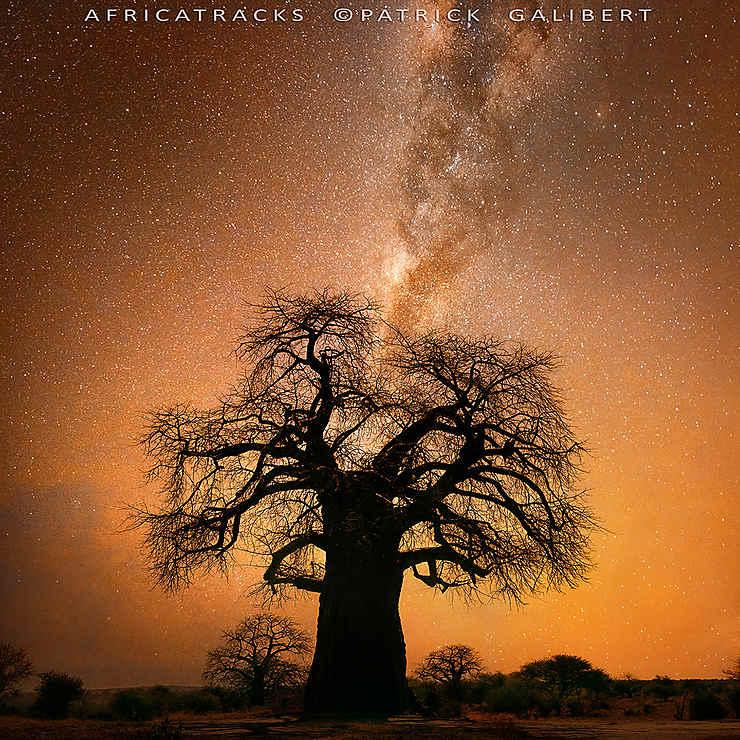 Baobab et voie lactée, Botswana