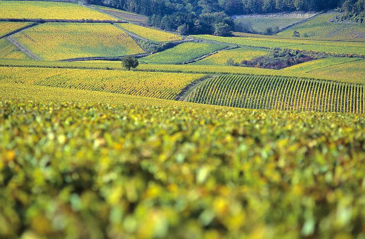 Les villages vignerons de l'Auxerrois
