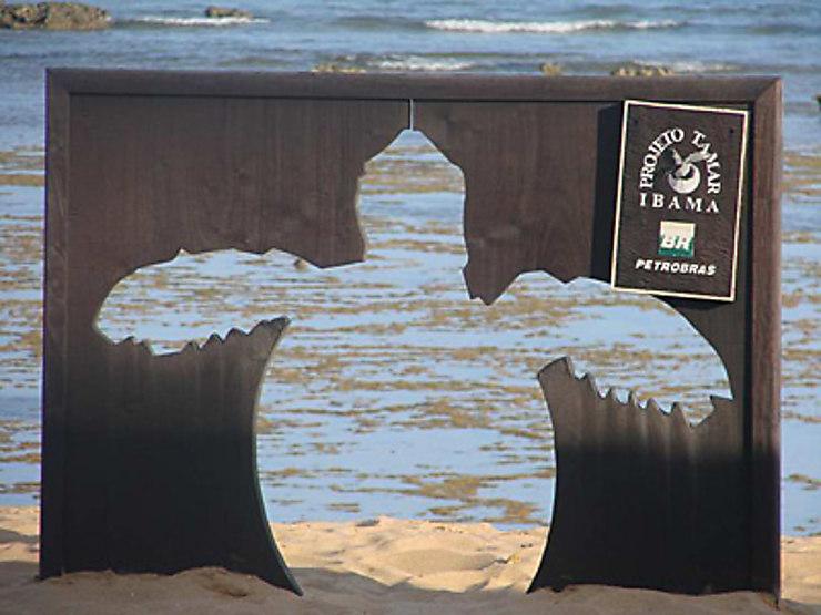 Les tortues de Praia do Forte