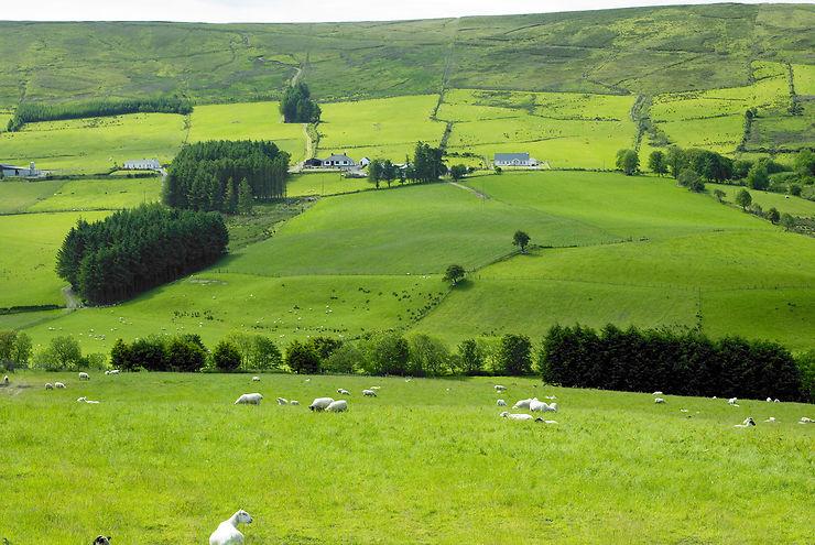 Sperrin Mountains (Irlande du Nord)