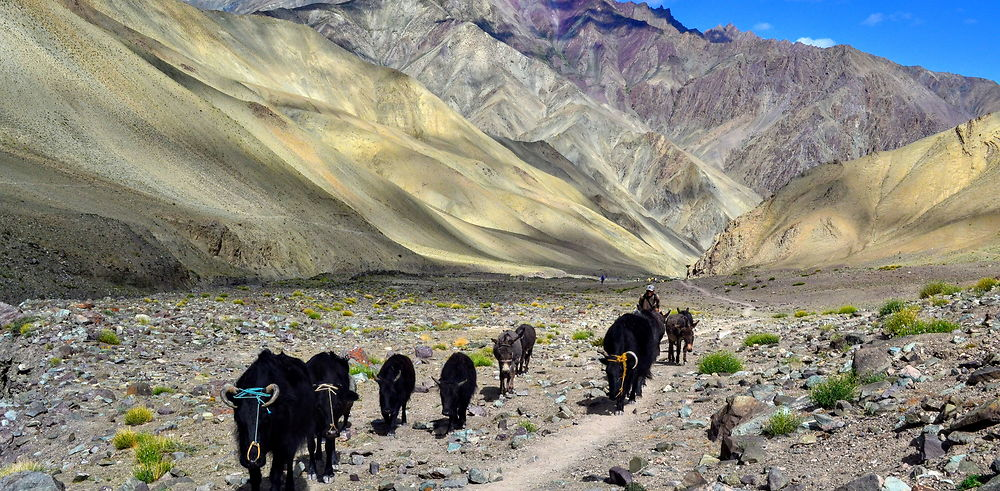 Ladakh – Trek de Spituk à Rumbak