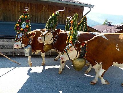 Vaches décorées - Transhumance 2013