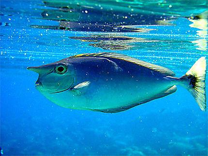 Superbe faune aquatique