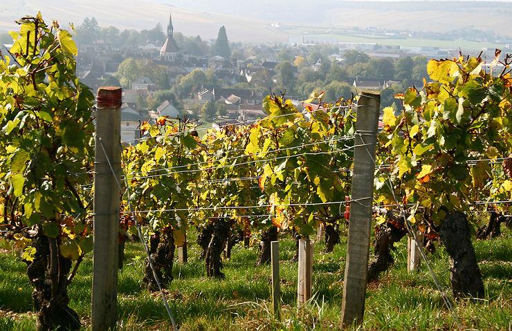 Oenotourisme en Bourgogne