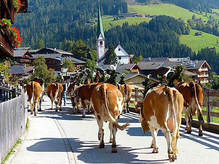 Transhumance - Arrivée à Alpbach